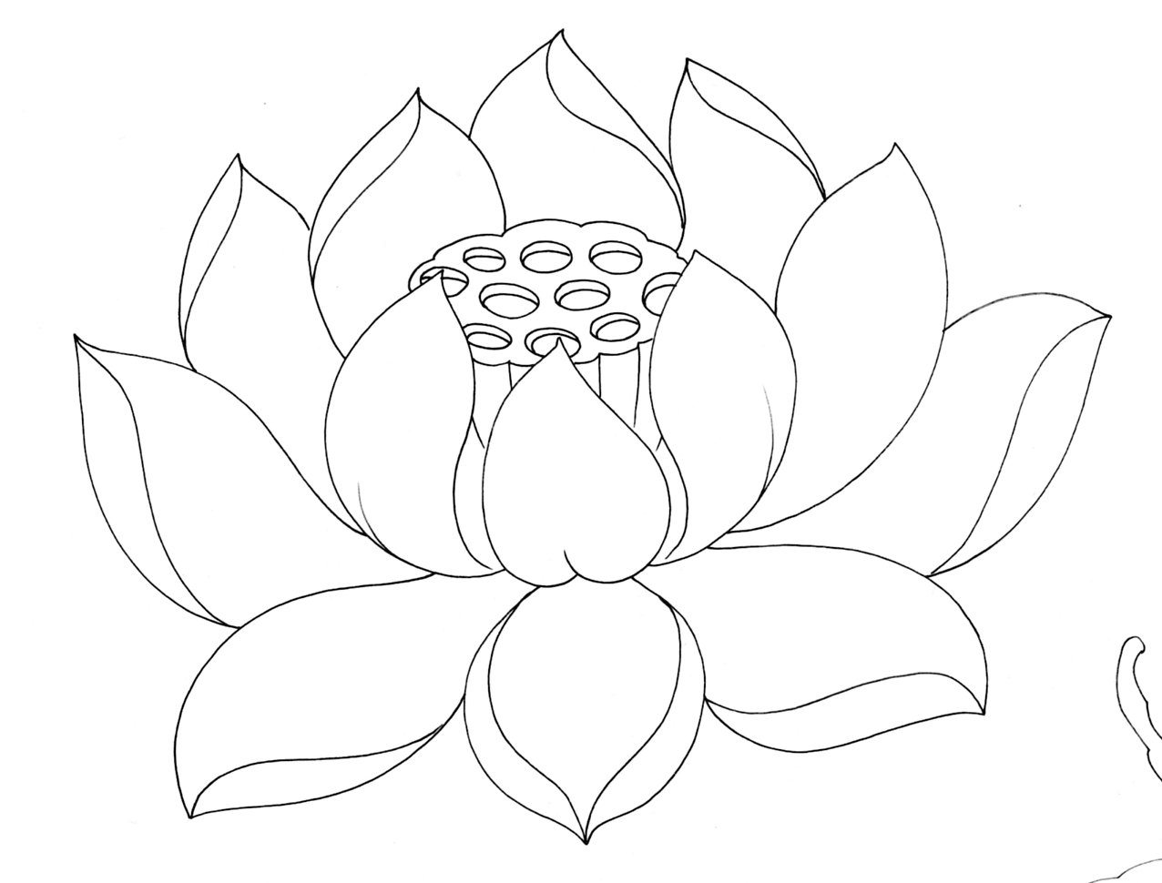lotus flower line drawing - photo #12